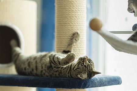 ausgeruht entspannt 6 buchstaben